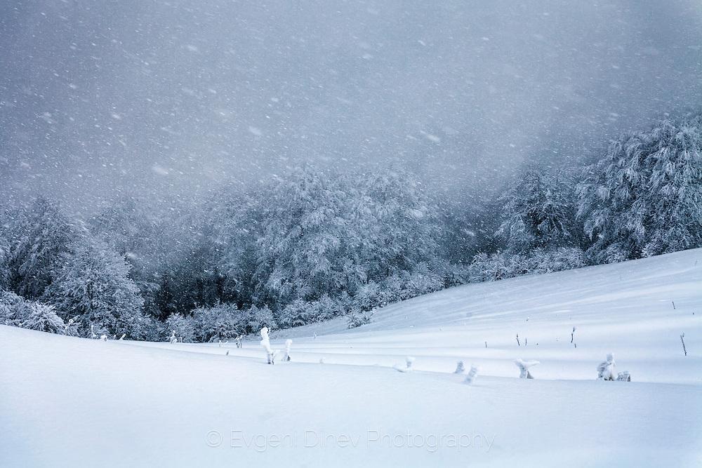 blizzard 5855d2